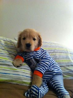 How adorable...He looks ready for a bed time story!