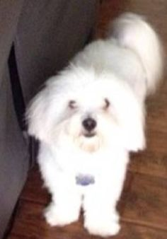 SOUTH GATE, CA - LOST DOG: Last seen on 9/1/2014 on Garfield Ave Please contact 323 697 24 79 Reward offered Crosspost from Craigslist. Please contact poster: http://losangeles.craigslist.org/lgb/laf/4647691314.html