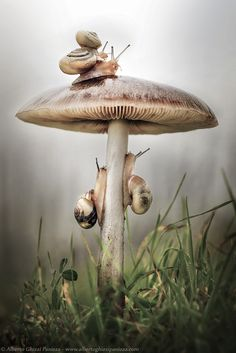 """Four Snails on a Mushroom"" 