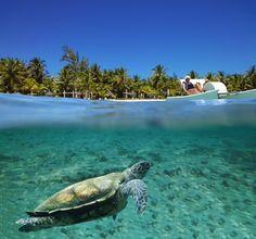 Tortue marine dans le lagon à l'Ile de la Réunion
