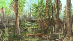 Among the giant plants in the Carboniferous forests were Cordaites, an early relative of conifers; Calamites, a bushy horsetail; Medullosa,a seed fern (a plant with seeds and fern-like leaves); Psaronius, a tree fern; and Paralycopodites and Lepidophloios, lycopsids (scaly, pole-like trees with cones). Lepidophloios could grow to 40 m (132 ft), but most of today's lycopsids, known as quillworts and club mosses, grow only a few centimeters high.