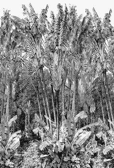 Des papiers peints d'ete: Papier peint Jungle, Casamance.