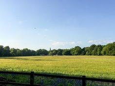 Wandering Through The Bluebell Wood In Ashridge Gabriella Wilde, British Countryside, Disney S, Live Action, Wander, Natural Beauty, Vineyard, Cinderella, Earth