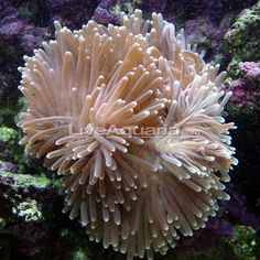 anemone - Google zoeken