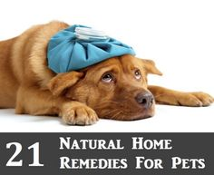 21 Natural Home Remedies For Pets...http://homestead-and-survival.com/21-natural-home-remedies-for-pets/