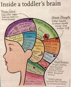 Inside a Toddler's Brain