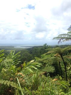 Daintree Rainforest, Queensland