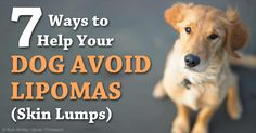 Why veterinarians don't remove lipomas (skin lumps) from dogs + 7 ways to help your dog avoid lipomas