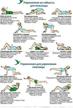 упражнения для растяжки спины - Поиск в Google