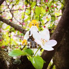 Sakuras bloom spectacularly and then fall to the ground within days. This is considered a reminder of our mortality by Japanese.  Samurai took this analogy further. For a warrior falling sakura represent the ideal life  live a brief but brilliant life and go out with a dramatic fall.  Sakuralar açtıktan çok kısa bir süre sonra dökülen çiçeklerine Japon kültüründe kendi faniliğimizi hatırlatan bir olgu olarak görülür.  Samuraylar bu benzetmeyi bir adım öteye taşıyarak Sakuraların dökülmesini…
