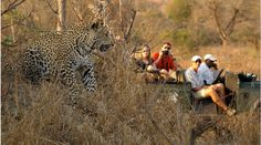 #south africa #leopard #game drive