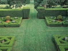 Image result for tall boxwood hedge privacy