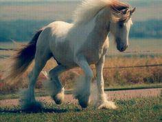My horse Max he is soo cute but he ded