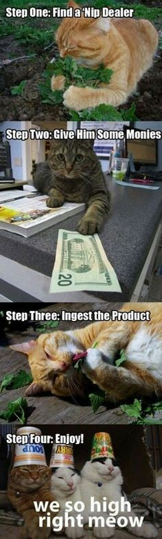 cat nip weed for cats <3