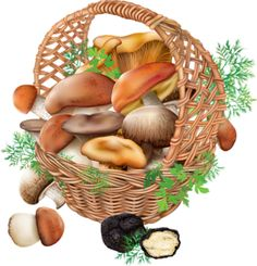 Buy Mushrooms in a Wicker Basket by dracozlat on GraphicRiver. Fresh edible mushrooms in a wicker basket on a white background Edible Mushrooms, Stuffed Mushrooms, Eclectic Baskets, Flyer Design Inspiration, Decoupage Art, Clip Art, Conceptual Design, Arts And Crafts Movement, Printable Paper