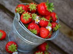 Top 10 easy to grow fruit trees and plants - Qmotu Strawberry Bread, Strawberry Plants, Strawberry Recipes, Note E Anote, Photo Fruit, Strawberry Health Benefits, Bucket Gardening, Food Truck, Summer Bucket
