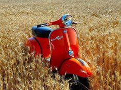 VESPA~Orange Vespa in a wheat field