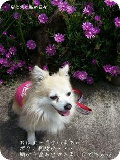 里親さんブログ朝んぽでちゅyo - http://iyaiya.jp/cat/archives/76678