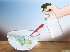 How to Kill Cockroaches or Ants Without Pesticide. Roaches and ants are pests that get into your home even though you don't want them inside. Commercial insecticides, sprays, and bombs contain harmful chemicals that can be harmful to you,. Cockroach Repellent, Insect Repellent, Home Remedies For Cockroaches, Eco Pest Control, How To Kill Cockroaches, Mosquito Yard Spray, Mint Plants, Organic Gardening Tips, Car Cleaning