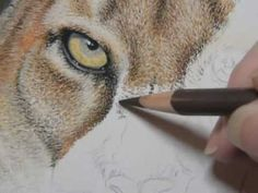 "Painting a Day Demonstration - Cougar by Roberta ""Roby"" Baer PSA - YouTube"