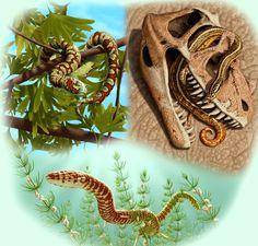 Paleontologists Find World's Oldest Known Snake Fossils  http://www.sci-news.com/paleontology/science-eophis-underwoodi-oldest-known-snake-fossils-02440.html  #science #fossils #newspecies #snake #paleontology #jurassic
