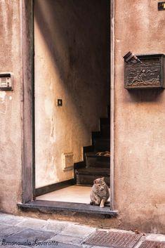 I trugoli di Santa Brigida - Foto Vagabonde Stairs, Home Decor, Stairway, Decoration Home, Room Decor, Staircases, Home Interior Design, Ladders, Home Decoration
