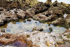 Tide Pools by Turtle Bay SEIS, via Flickr Turtle Bay Resort, North Shore Oahu, Tide Pools