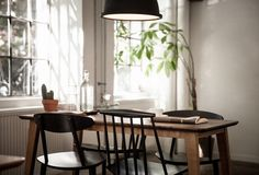 tall tree plant in the kitchen- fig tree!!!//