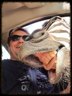 https://flic.kr/p/vf6XkS | Lustiges Zebra | ...ein Selfie mit meiner neuen Freundin! ;)