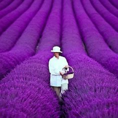 Infinity Road    France, Lavender Fields