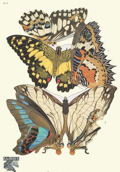 1. Papilio demoleus, Tonkin; 2. Papilio demoleus, Tonkin; 3. Cethosia cyane, Sikkim; 4. Papilio sarpedon, Tonkin; 5. Cyrestis thyodamas, Indo Malaisie