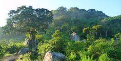 Minneriya Nationalpark