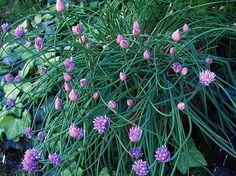 My Garden - Flowers - Claudia's Secrets