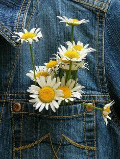 Daisy love...