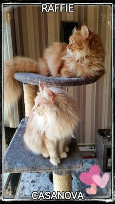 Raffie and Casanova