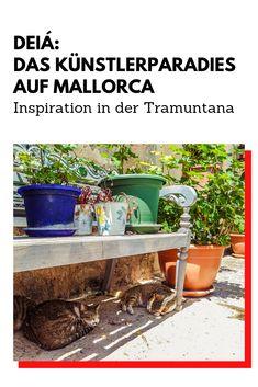 Deia Mallorca, Port De Soller, Such Und Find, Inspiration, Cypress Trees, Hostel, Beautiful Places, Vacation, Biblical Inspiration