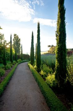 Italian cypresses, box hedging, and lavender give the entrance path a Mediterranean air.