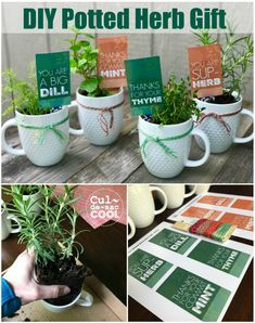 DIY Potted Herb Gift – Perfect for Mother's Day or Teacher Appreciation - gift ideas Volunteer Appreciation Gifts, Volunteer Gifts, Teacher Appreciation Luncheon, Gifts For Volunteers, Principal Appreciation, Teacher Appreciation Week, Staff Gifts, Gag Gifts, Teachers Day Gifts