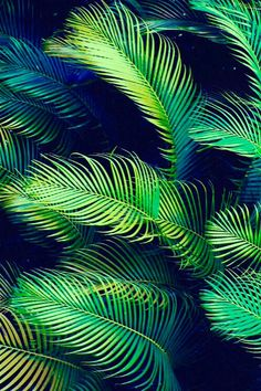 000, aesthetic, background, boho, dope, fresh, green, hippie, hipster, leaves, nature, palm trees, paradise, photography, tropical, vibrant, summertime sadness