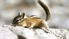 Have you ever caught yourself thinking about where do squirrels sleep? What the animals actually do for shelter? We are talking about those in the wilderness that are getting on their own...