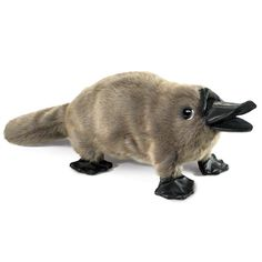 Folkmanis Puppet - Baby Platypus Hand Puppet Miss 6 recrntly learnt about Australian animals, platypus was here favourite! Cute Little Animals, Cute Funny Animals, Cute Dogs, Cute Babies, Baby Platypus, Baby Animals Pictures, Funny Animal Pictures, Animals And Pets, Wild Animals