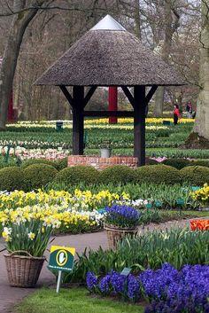 Keukenhof Gardens, The Netherlands #visitholland #travel