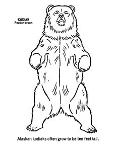 Animal Outlines to Print | Wild animal coloring page | Kodiak Bear up Coloring page