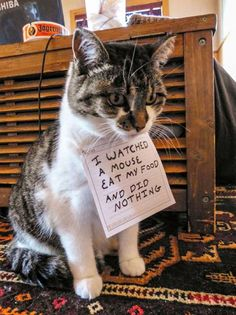 Cat Shaming (19 Photos) : theCHIVE