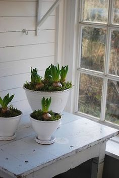 (via Forced Bulbs: A Primer : Remodelista)