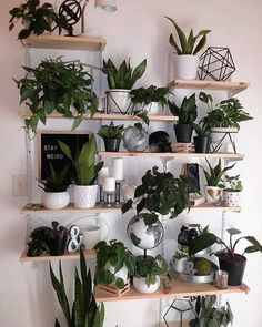 Indoor Plants Plant Wall Wall Decor DIY Plant Decor Wall Living Room Decor Sukkulenten dekor diy Indoor Plants, Plant Wall, Wall Decor, DIY Plant Decor Wall, Living Room Decor … Sukkulenten - home decor diy Living Room Decor, Plant Decor, Living Room Wall Designs, Large Indoor Plants, Diy Plants Decor, House Interior Decor, Room With Plants, Living Decor, Plant Wall
