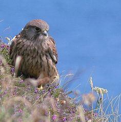 Belvoir Wildlife With Wings: Jan Nichols's photo