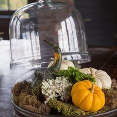 Simple ideas to warm a space in your home. #mossmountain #joy #sharethebounty #comeseeus  #ShopPAllen #pumpkins #gardenchat #thankful #harvest #garden