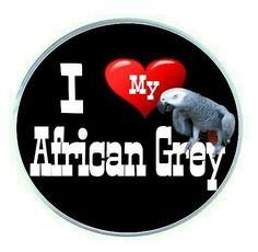 I Love My African Grey Parrot Round Fridge Magnet (PG-0402)