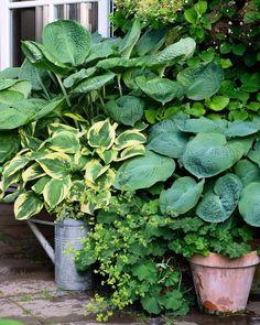 """1,800 Likes, 17 Comments - Photographer Mette Krull (@krullskrukker) on Instagram: """"What a great season this is!   #hosta #green #garden #gardenlove #containergarden #potgardning…"""""""